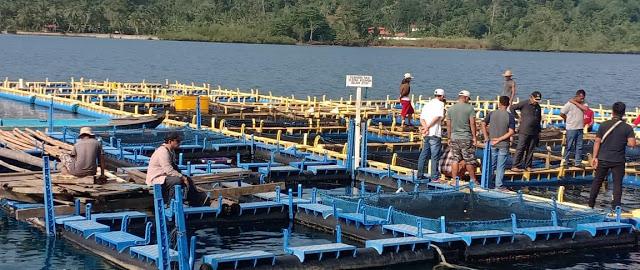 Tingkatkan Taraf Ekonomi Nelayan, BBIP Sikakap Tingkatkan Budidaya Ikan Kerapu